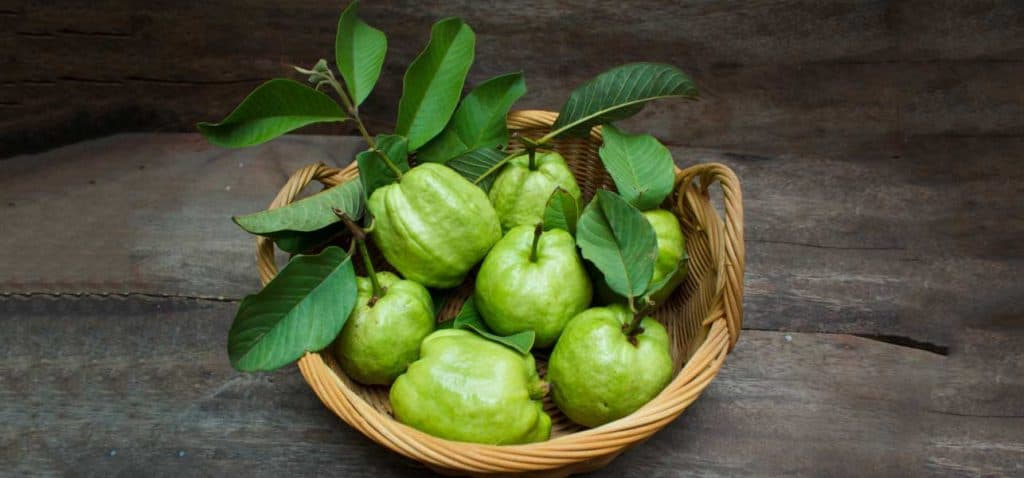 How-Are-Guava-Leaves-Beneficial-For-Your-Hair-1